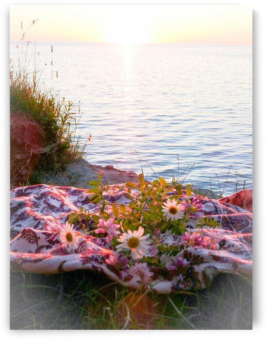 Katies Daisy Sunset by Cindy Rogers