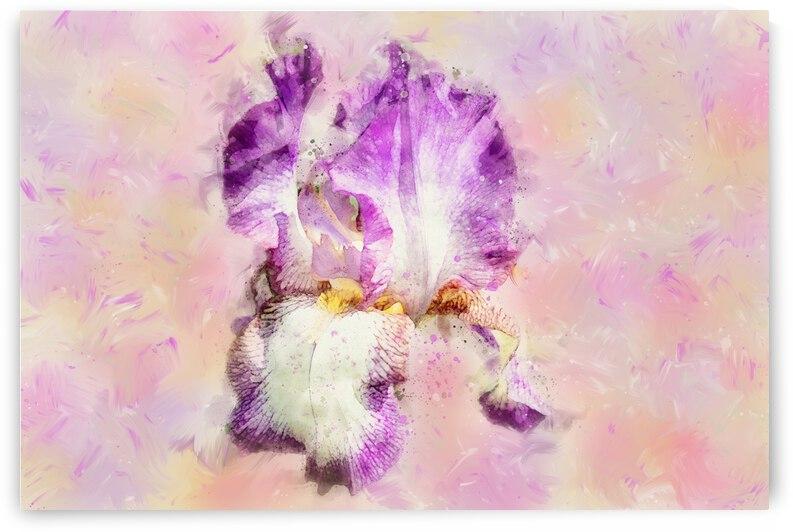 Iris flower by PitoFotos