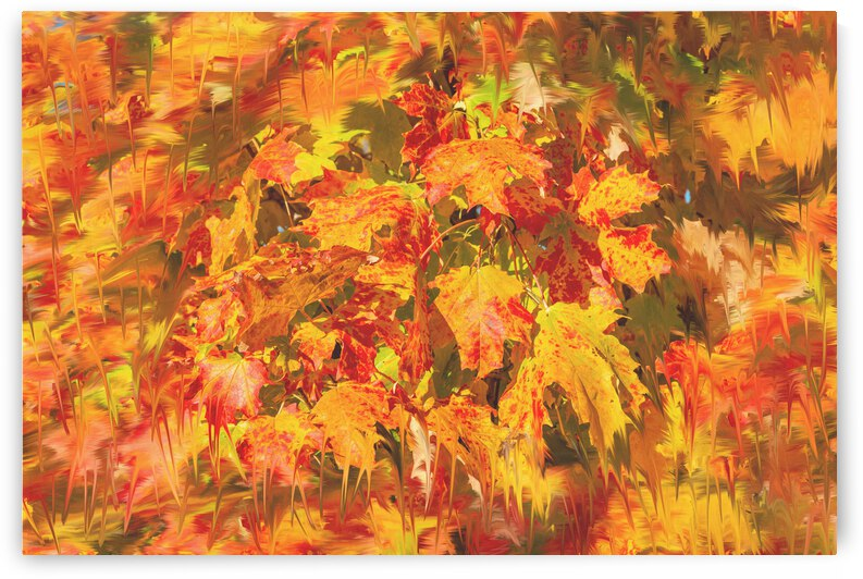 Melting Autumn Colors by PitoFotos