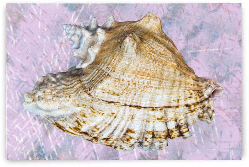 Seashell  by PitoFotos