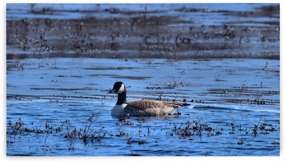 Lone Goose at Marsh Landscape by Bern E King Photography