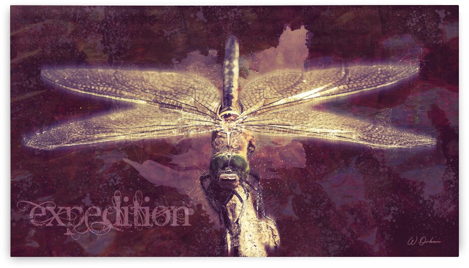 Expedition by Orban Collection