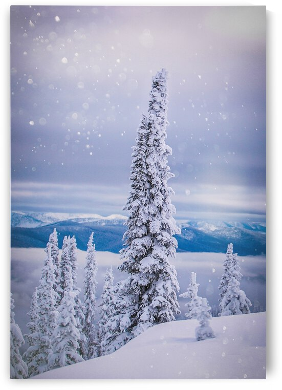 Lone Tree - Baldface Lodge by Stephan Malette