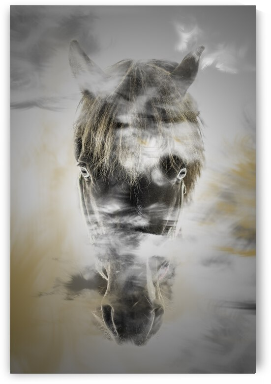 Cheval by Photobec