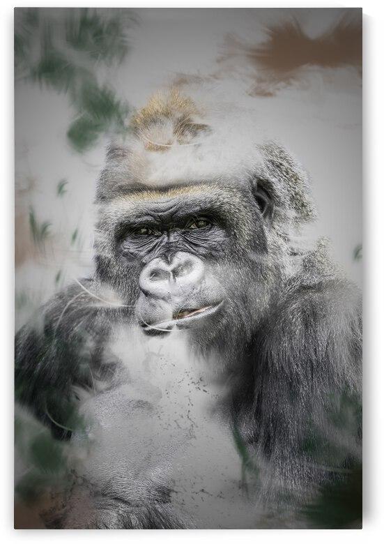Gorille by Photobec