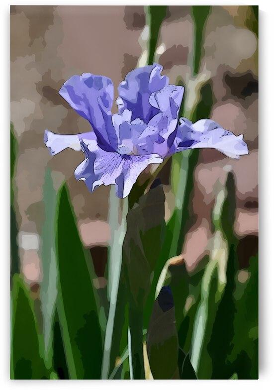Blue Iris 1 by Barbara Treen
