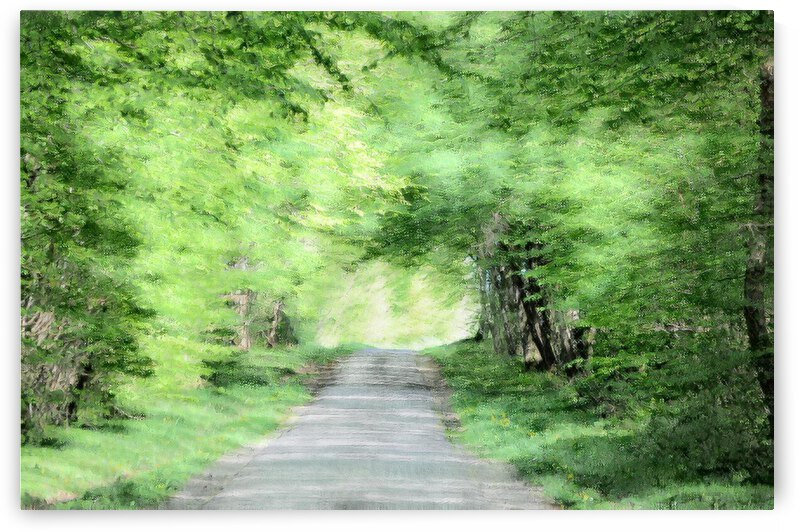 country road france by Barbara Treen
