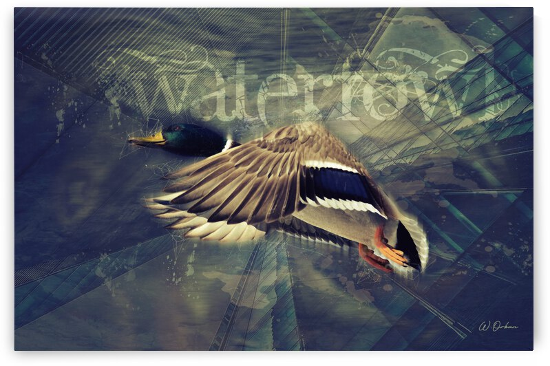 Waterfowl by Orban Collection