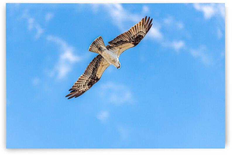 Hunting blue skies - D755254 by GreigsPhotoWorks