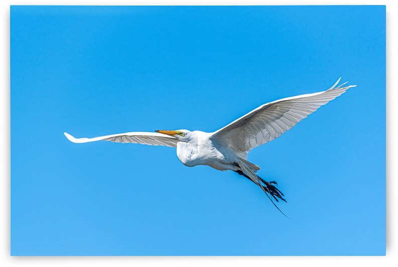 Outstretched wings - D758329 by GreigsPhotoWorks