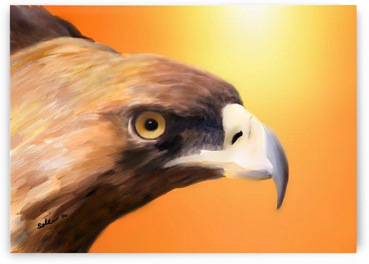 Eagle by Sarah Tracy