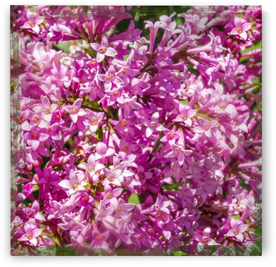 Pink lilac flowers Square Photomontage by Francois Lariviere