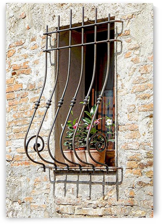 Window Grill Cetona by Dorothy Berry-Lound