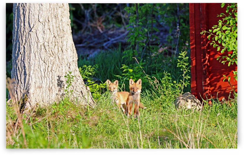 Foxy Faces by Deb Oppermann