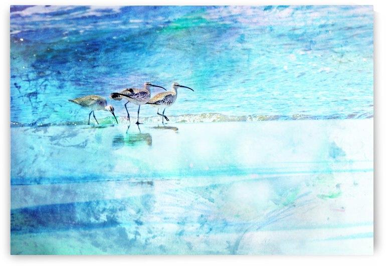 Three Whimbrels by Barbara Treen