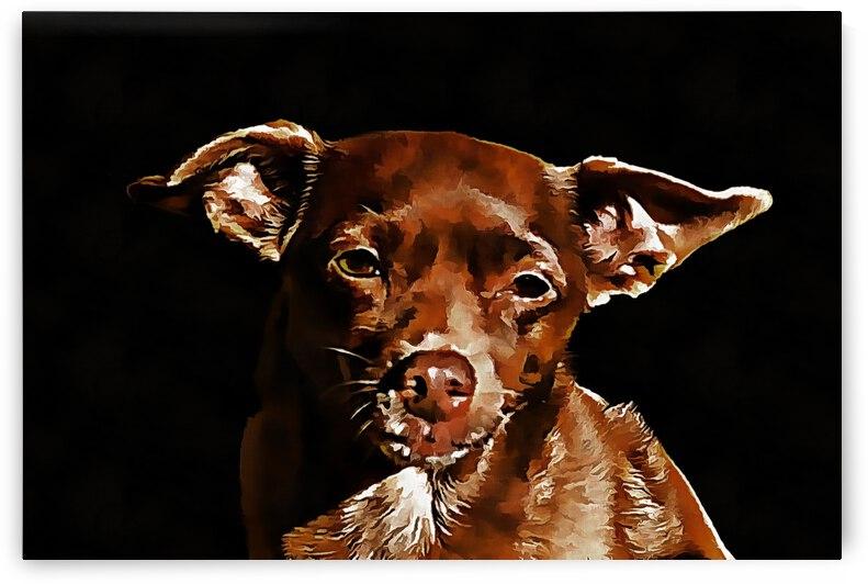 Brown Miniature Pinscher Portrait by Dorothy Berry-Lound