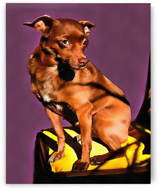 Cute Brown Miniature Pinscher by Dorothy Berry-Lound