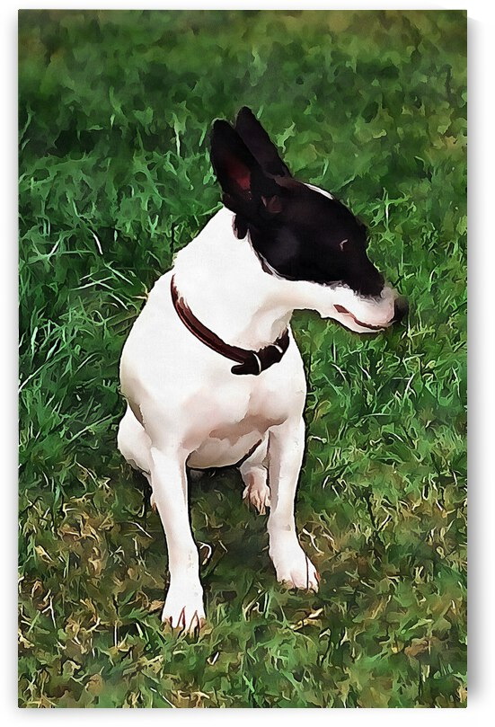 Pensive Jack Russell by Dorothy Berry-Lound