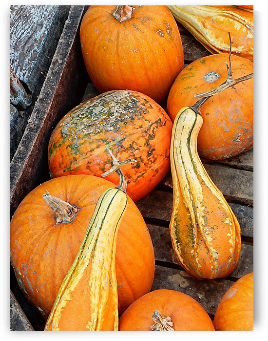 Ornamental Gourds And Pumpkins by Dorothy Berry-Lound