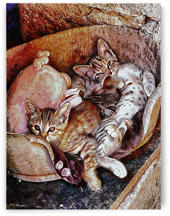 Kitten Cuteness Overload by Dorothy Berry-Lound
