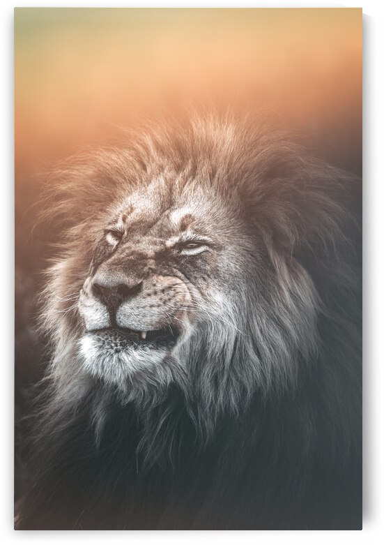 The Lions Grind by Melanie Delamare