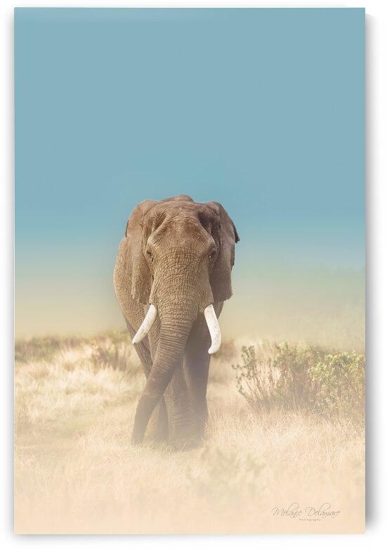 The Elephants Path by Melanie Delamare