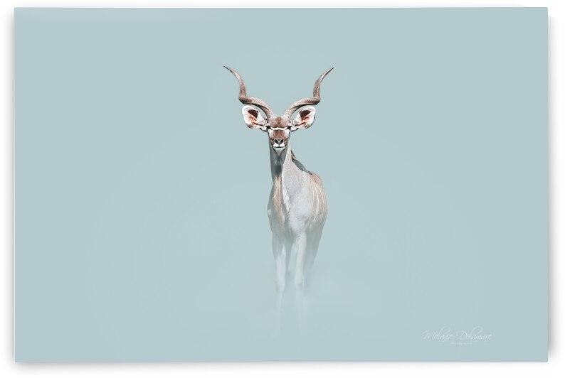 Royal Kudu by Melanie Delamare