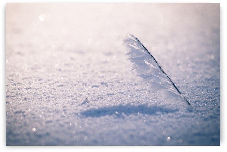 Winter by ATTiLA GiMESi