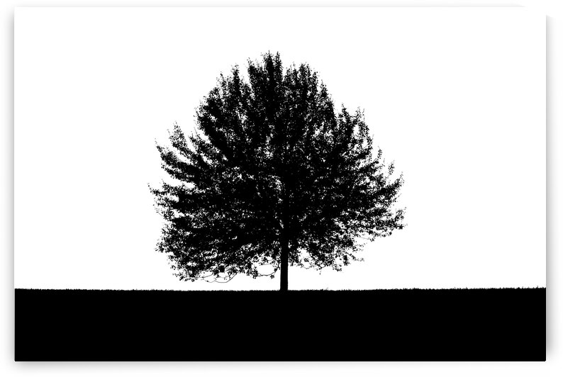 Silhouette of a lonely tree by ATTiLA GiMESi