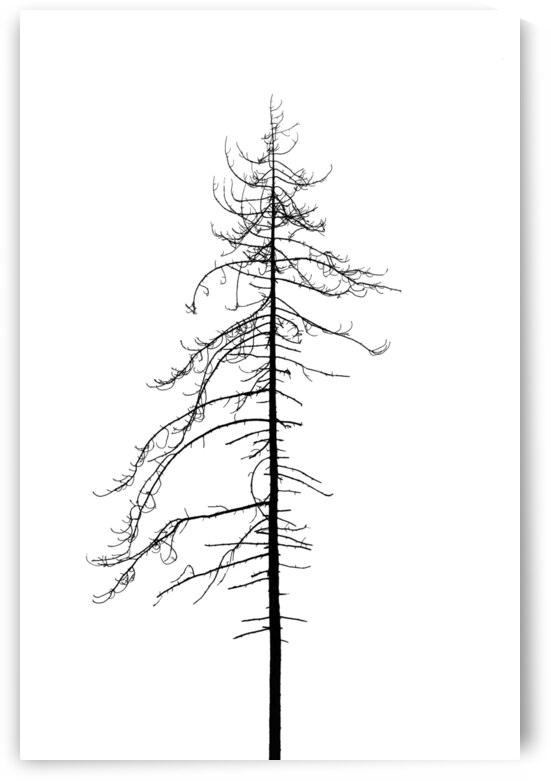 Tree silhouette by ATTiLA GiMESi