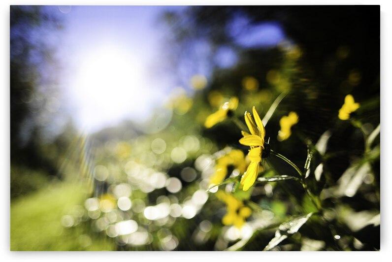sunny meadow by nami sakamoto