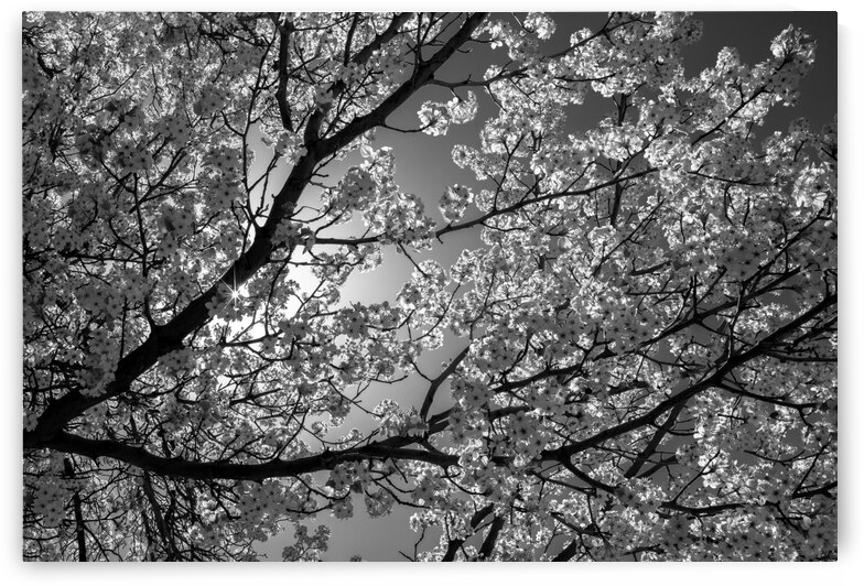 Glowing Blossoms by Evan Petty Photography