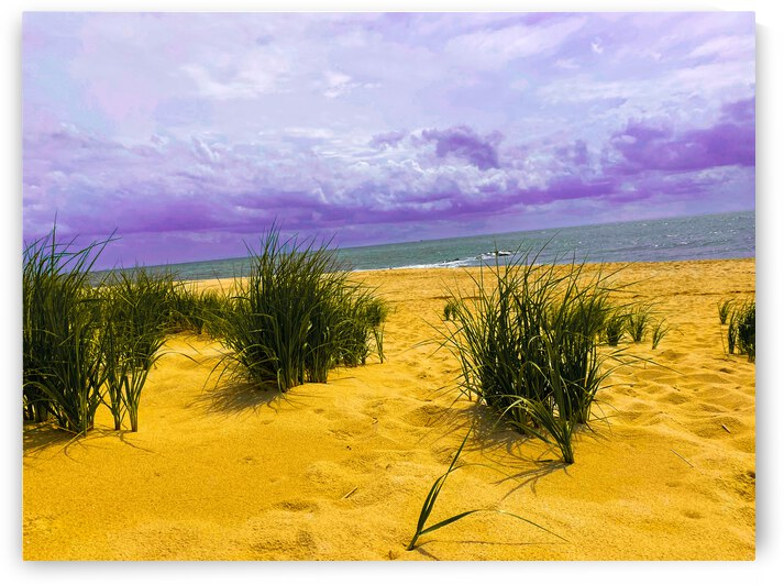 Dunes at Cape May by Sarah Butcher