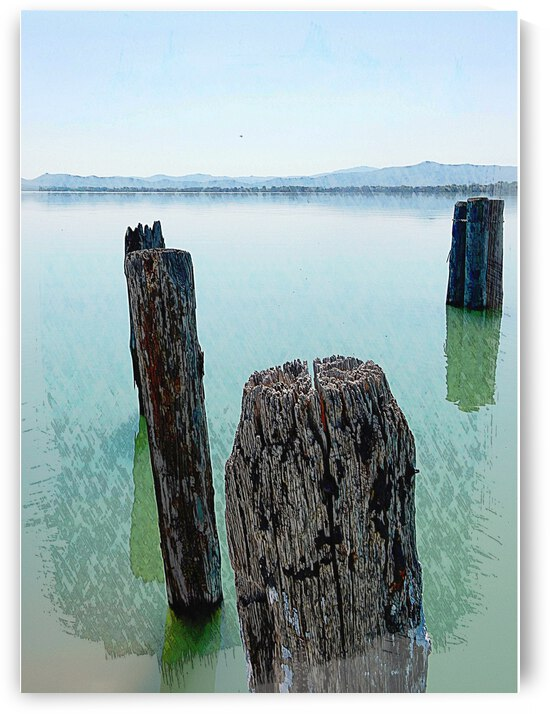 Old Wooden Boat Piles by Dorothy Berry-Lound