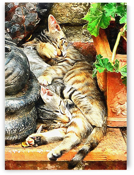 Kitten Snuggles by Dorothy Berry-Lound