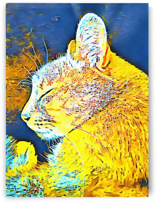 Cat Fancy by Dorothy Berry-Lound