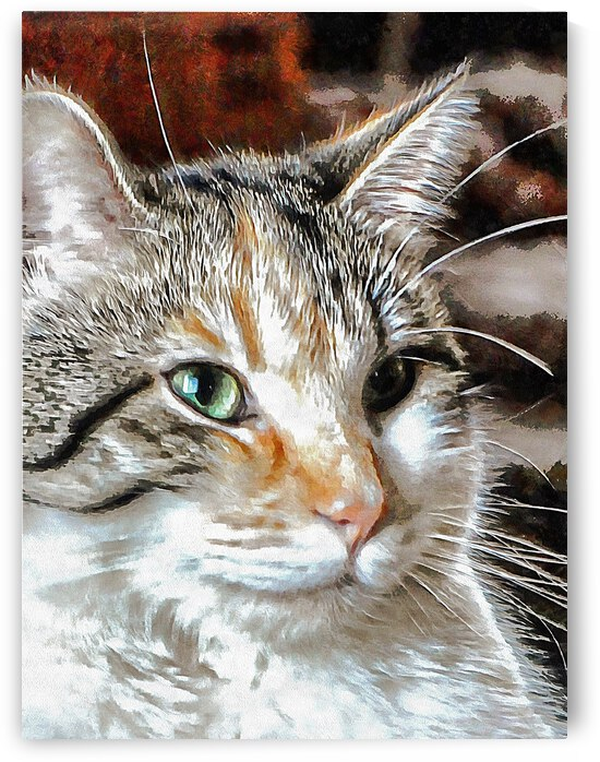 And Whiskers To Match by Dorothy Berry-Lound