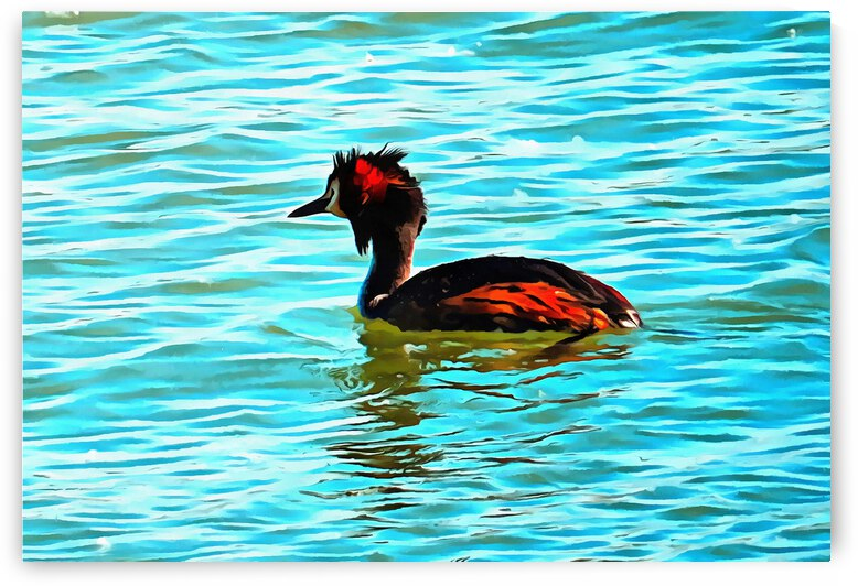 Great Crested Grebe by Dorothy Berry-Lound