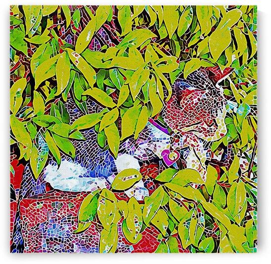 Hidden Kitten Mosaic by Dorothy Berry-Lound