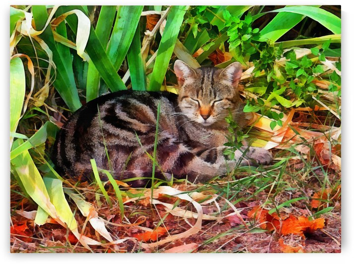 Snoozing In Autumn Sunshine by Dorothy Berry-Lound