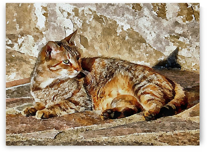 Me And My Shadow Sunbathing by Dorothy Berry-Lound