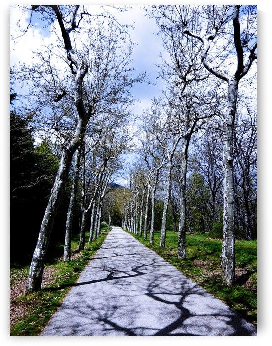 Casita del Principe 6 of 7 - Park and Gardens - The Royal Monastery of San Lorenzo de El Escorial - Madrid Spain by 1North