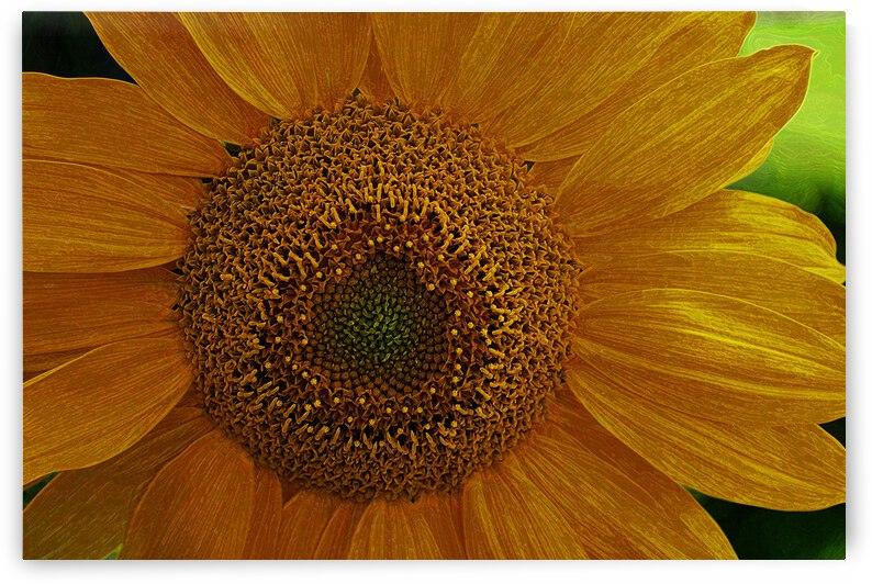 Enhanced Sunflower by COOL ART BY RICHARD
