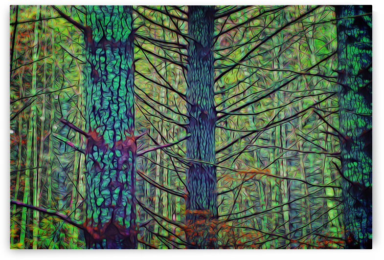 Forest Splendor by COOL ART BY RICHARD
