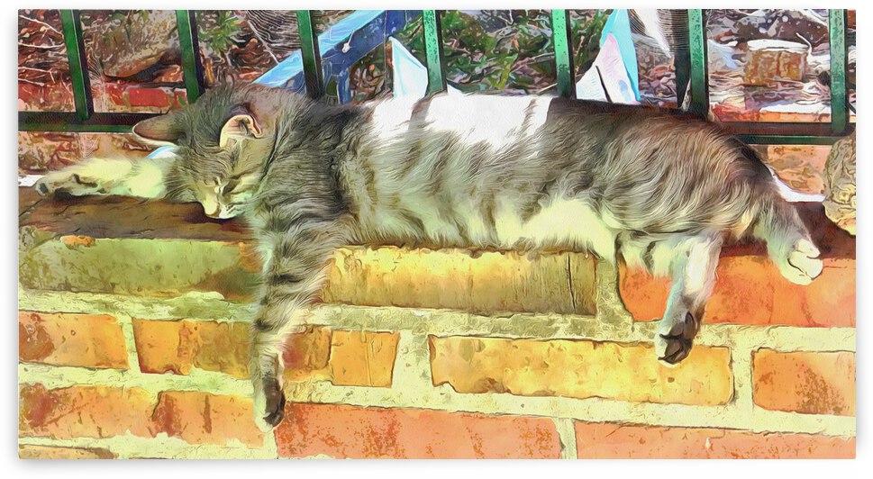 I Can Sleep Anywhere by Dorothy Berry-Lound