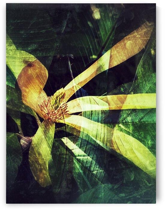 Reaching Petals by BotanicalArt ca