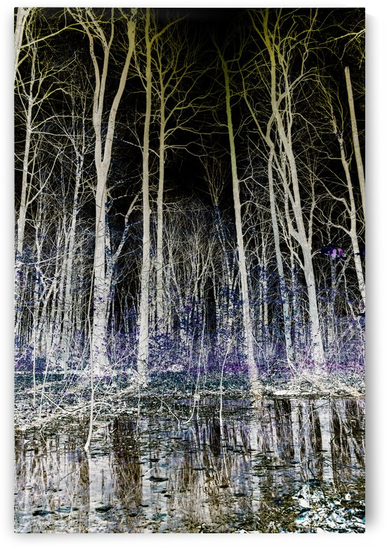 Foret enchantee 2 by Joelle Tambe