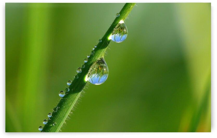 Grass with Waterdrop by Gabi Siebenhuehner