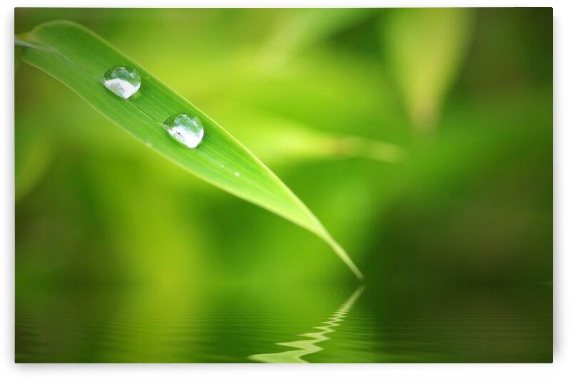 Bamboo Leaf with Drops by Gabi Siebenhuehner