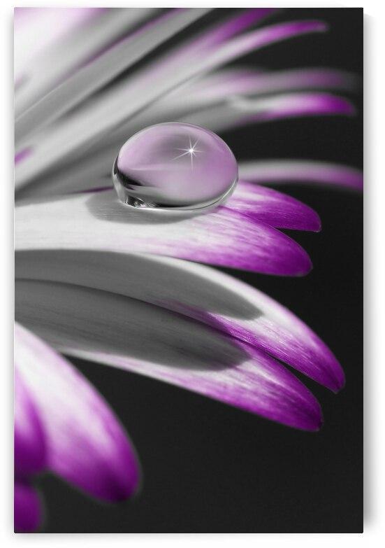 Flower with Pearls by Gabi Siebenhuehner